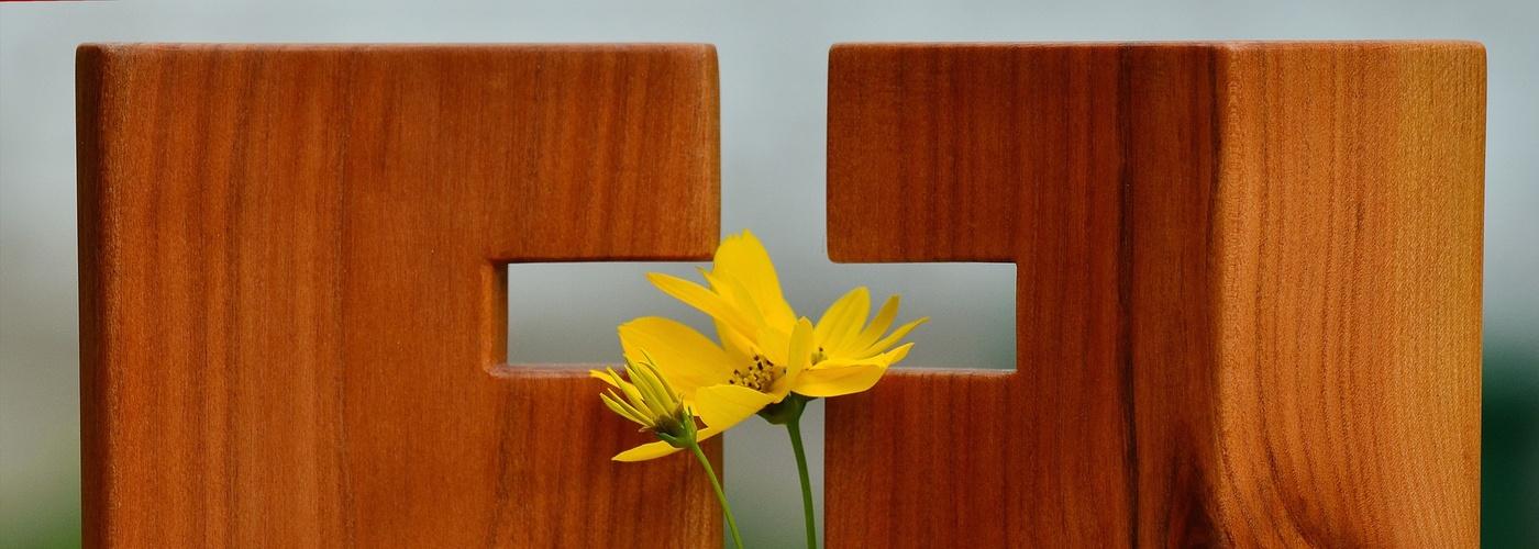 Blume im Kreuz